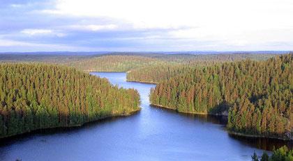 Un fjord et la forêt finlandaise